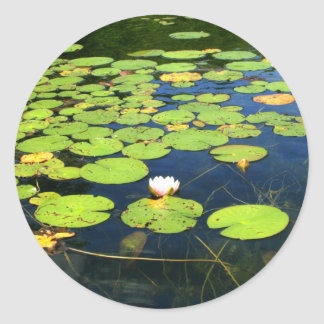 Lily pad stickers