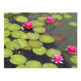 Lily Pads and Lotus Zen Post Card