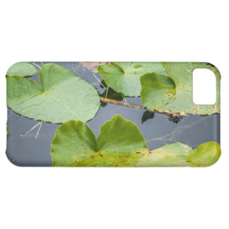 Lily Pads iPhone 5C Case