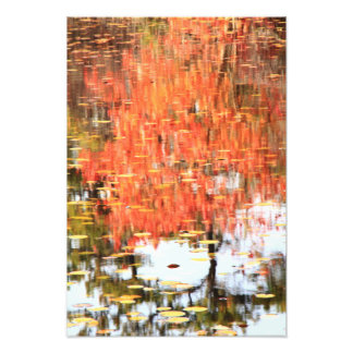 Lily Pond Water Reflections in Autumn Photo Art