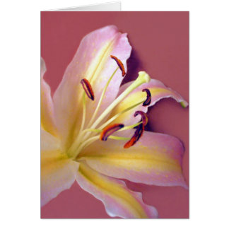 Lily Soft Card
