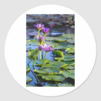 Lily Round Sticker