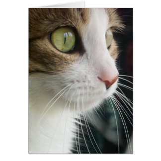 Lily the Cat Greeting Card 03