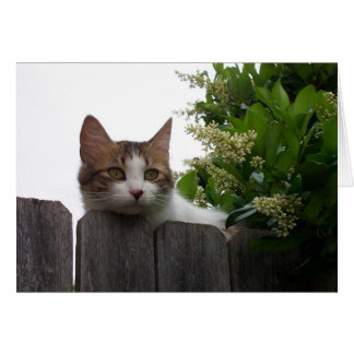 Lily the Cat Greeting Card 04