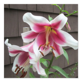 Lily White Purple Large Plant 13 Cm X 13 Cm Square Invitation Card