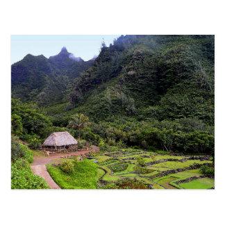 Limahuli Garden Taro Fields, Kauai Postcard