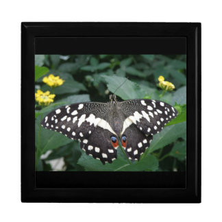 Lime Butterfly and Flowers Gift Box