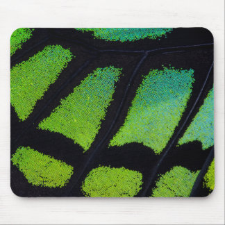 Lime green and black butterfly wing mouse pad