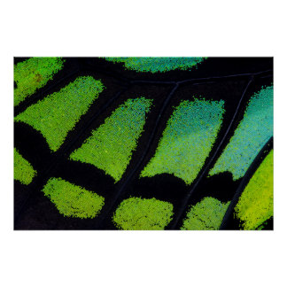 Lime green and black butterfly wing poster