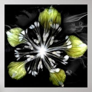 Lime Light Print
