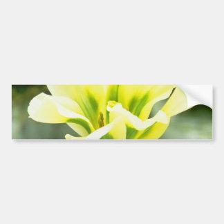 Lime Rembrandt tulip, 'Spring Green' flowers Bumper Sticker