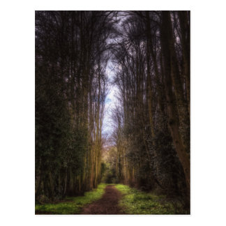 Lime Tree Path Postcard