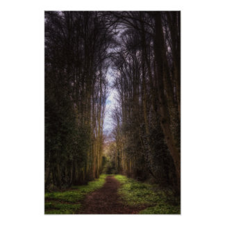 Lime Tree Path Poster