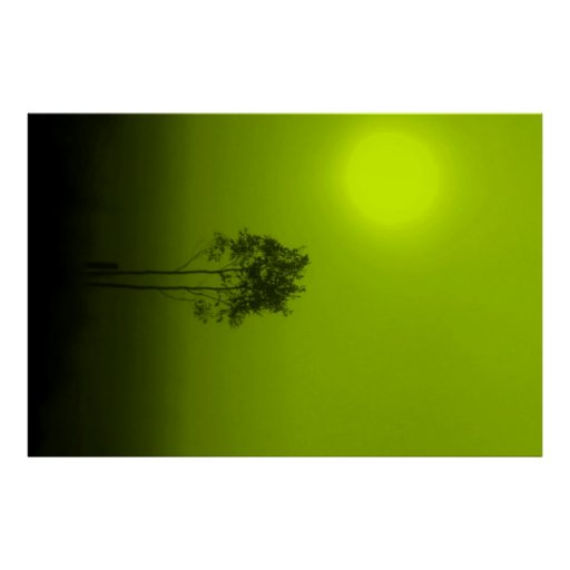 Lime Trees Poster