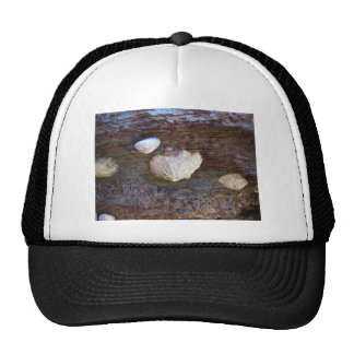 Limpets 2 mesh hats