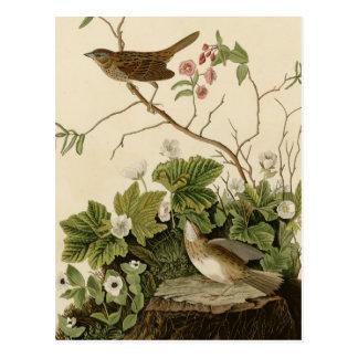 Lincoln Finch Postcard