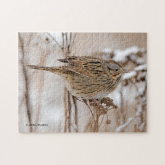 Lincoln's Sparrow on Tansy Jigsaw Puzzle