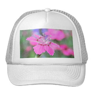 Line Drawing - Cottage Pinks Hat