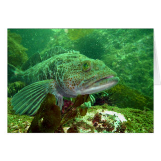 Ling Cod Greeting Card