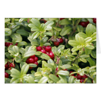 Lingonberry Greeting Card