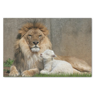 Lion and lamb Christmas Tissue Paper