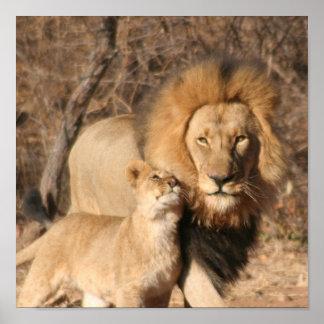 Lion and Lion Cub Print