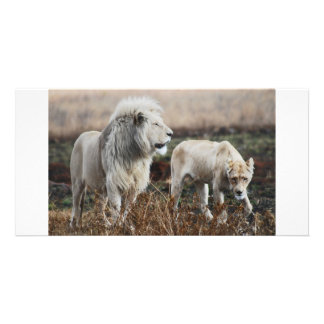 Lion as king personalized photo card