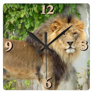 Lion at Masai Mara 2 Square Wall Clock