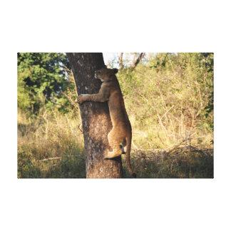 Lion climbing a tree canvas print