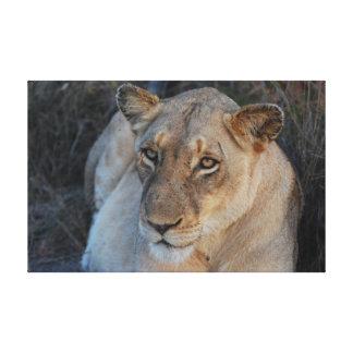 Lion close-up canvas print