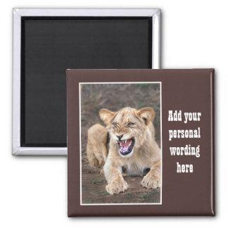 Lion cub baby fridge magnets
