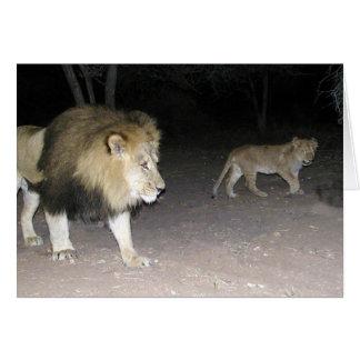 Lion & Cub Card