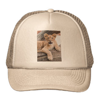 Lion cub mesh hats