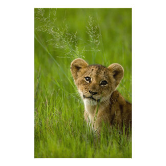 Lion Cub In The Tall Grass Stationery