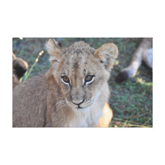 Lion cub looking upwards canvas print