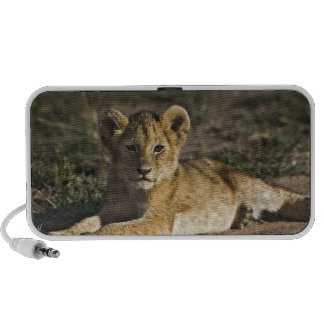 Lion cub, Panthera leo, lying in tire tracks, Notebook Speaker