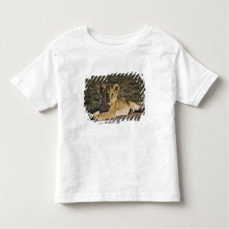 Lion cub, Panthera leo, lying in tire tracks, T-shirts