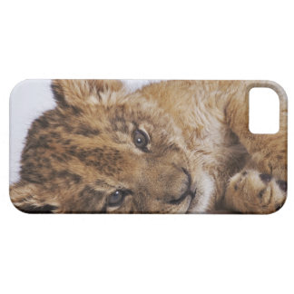 Lion cub (Panthera leo) lying on side, close-up iPhone 5 Cover