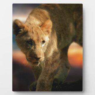 Lion Cub Photo Plaques