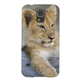 Lion cubs on log, Panthera leo, Masai Mara, Galaxy S5 Covers