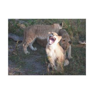 lion cubs teasing canvas print