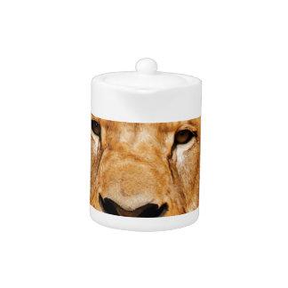 lion face yeah