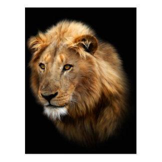 lion focus postcard