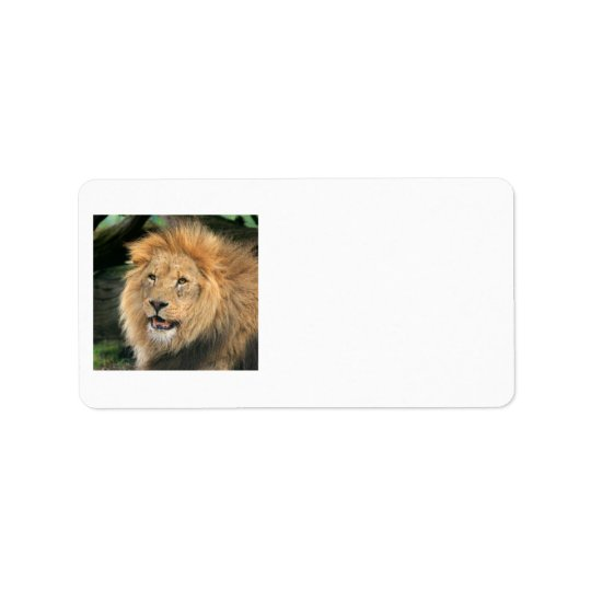 lion head beautiful male photo address labels