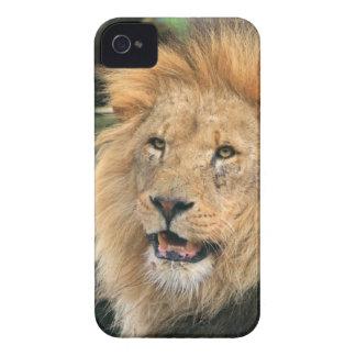 Lion head male handsome photo blackberry bold case
