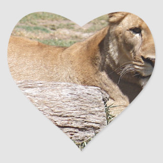 Lion Heart Sticker