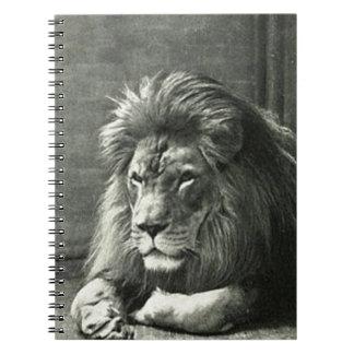 Lion Illustration Notebook