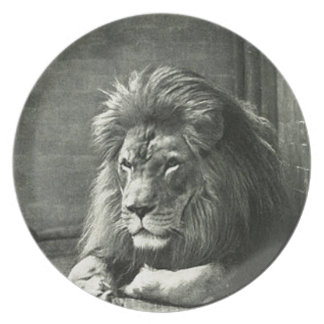 Lion Illustration Plate