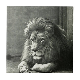 Lion Illustration Tile