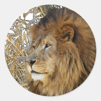 LION IN GRASS ROUND STICKER